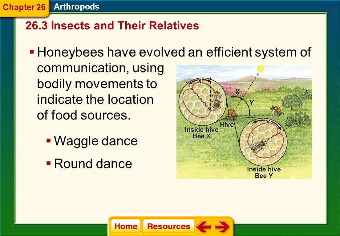 Honeybees have evolved an efficient system of