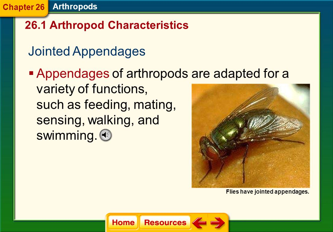 Appendages of arthropods are adapted for a