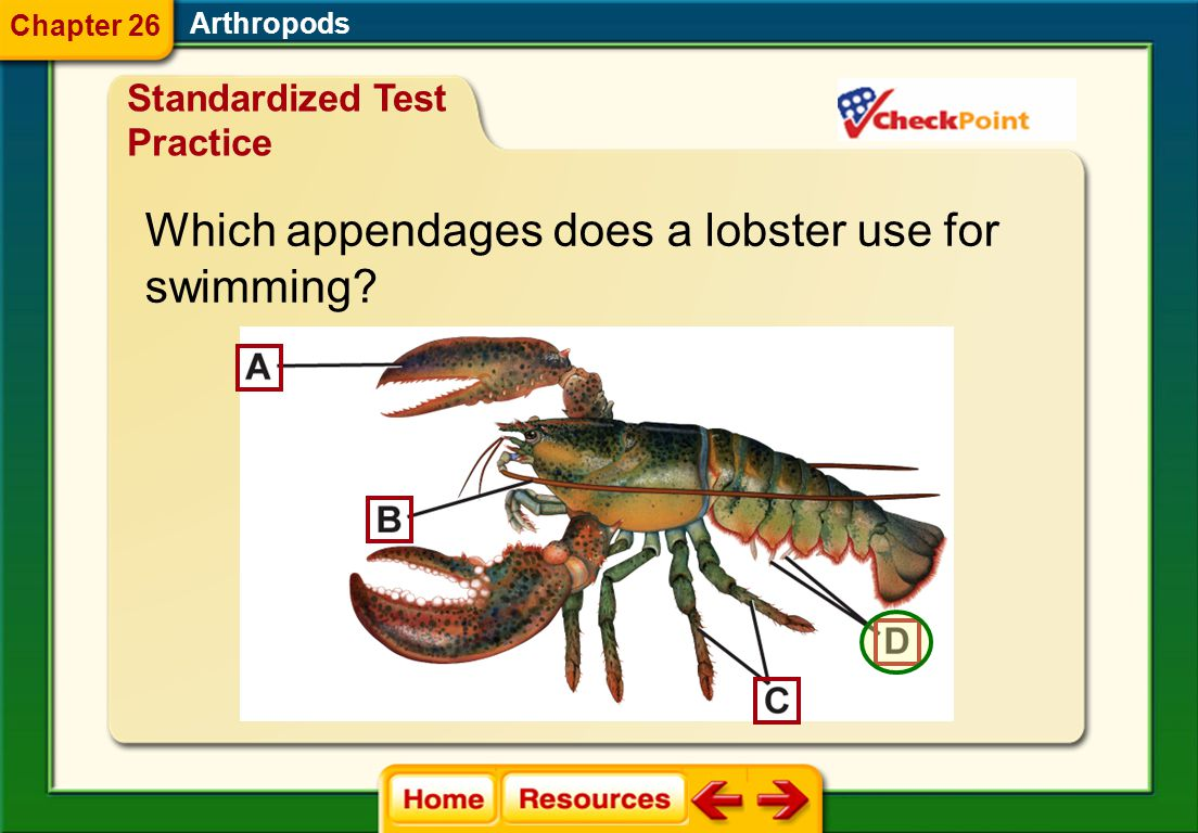 Which appendages does a lobster use for swimming