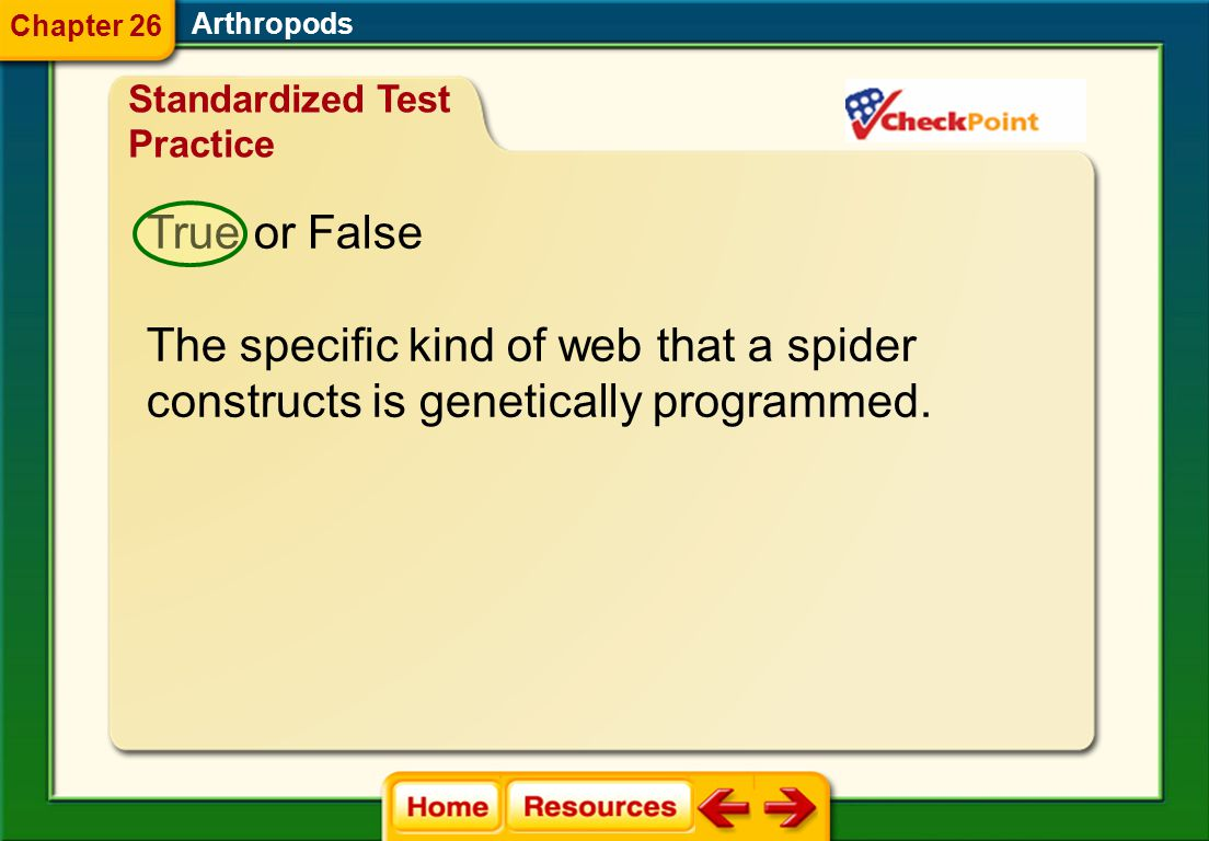 The specific kind of web that a spider