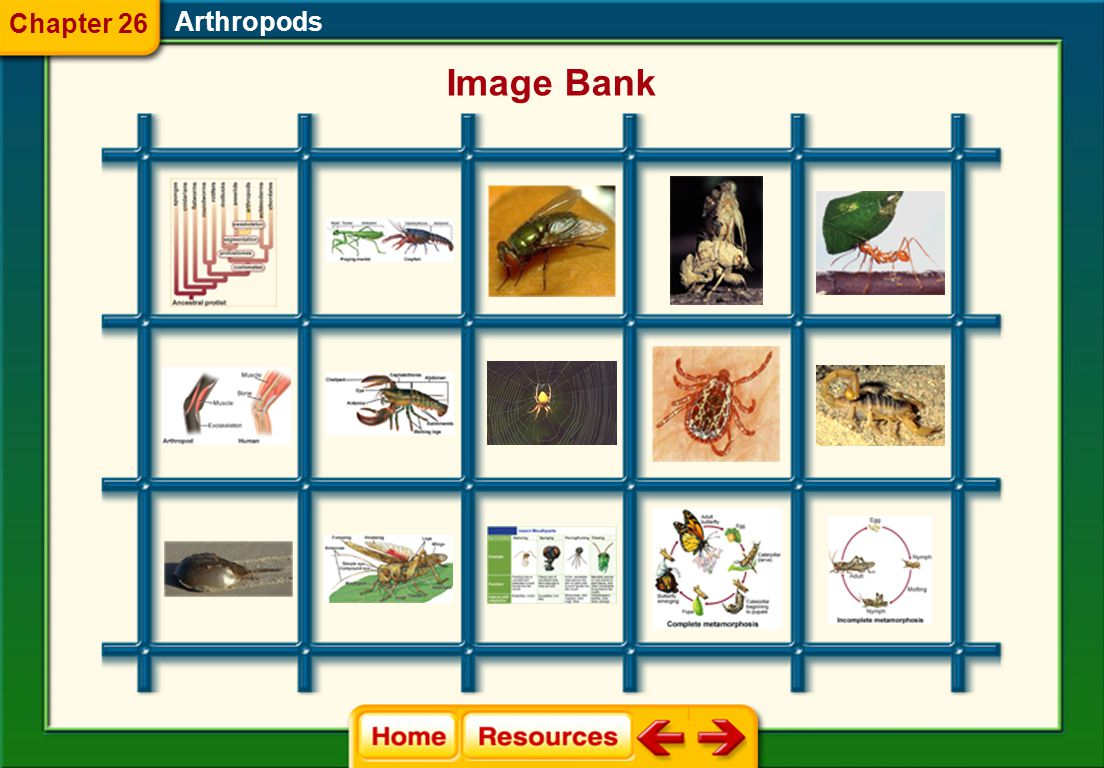 Chapter 26 Arthropods Image Bank