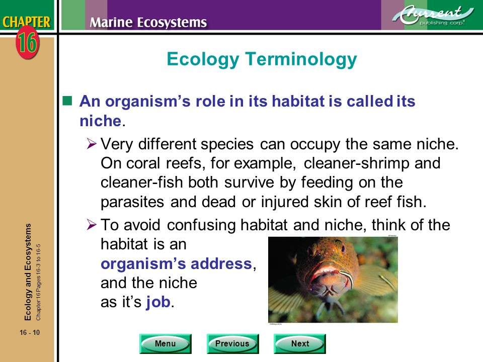 Ecology Terminology An organism's role in its habitat is called its niche.