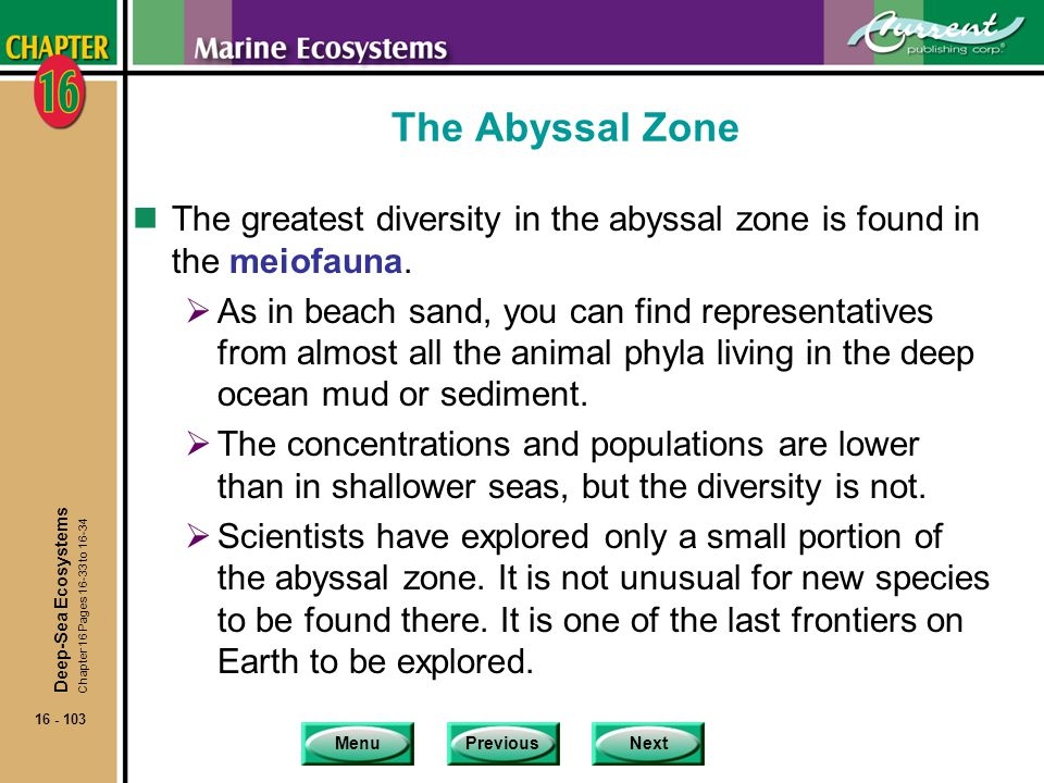 The Abyssal Zone The greatest diversity in the abyssal zone is found in the meiofauna.