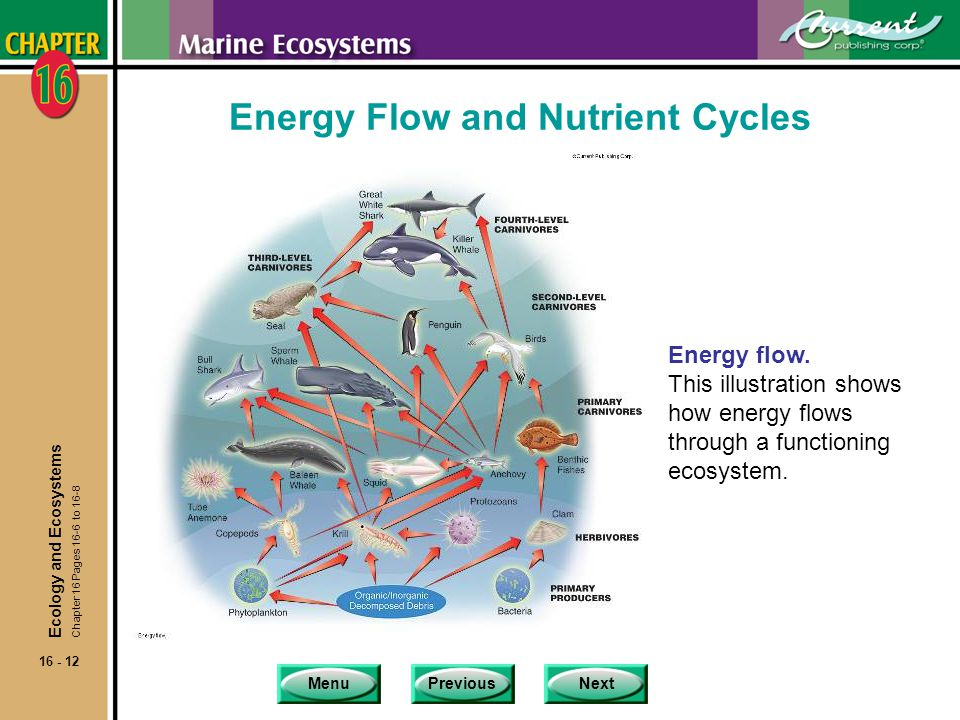 Energy Flow and Nutrient Cycles