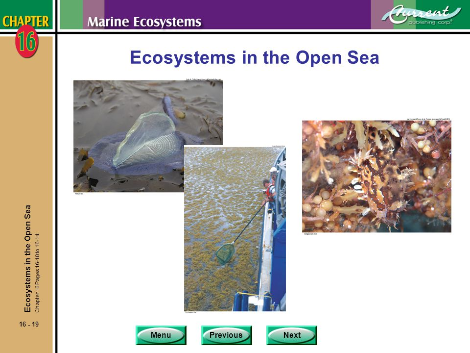 Ecosystems in the Open Sea