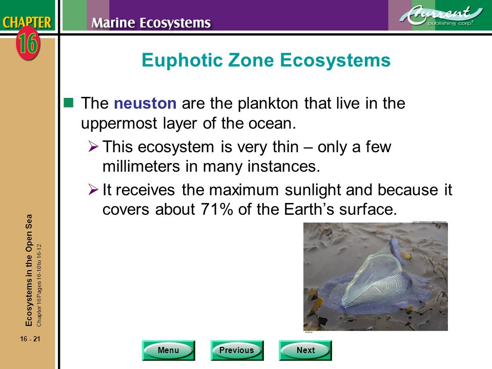 Euphotic Zone Ecosystems
