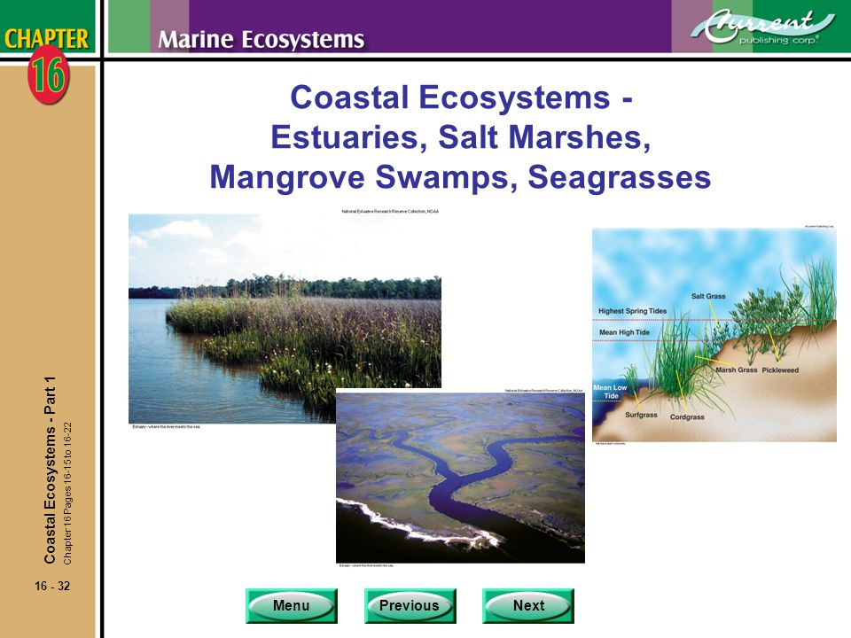Coastal Ecosystems - Estuaries, Salt Marshes, Mangrove Swamps, Seagrasses