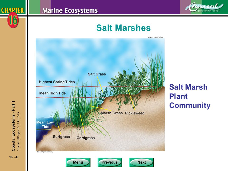 Salt Marshes Salt Marsh Plant Community Coastal Ecosystems - Part 1