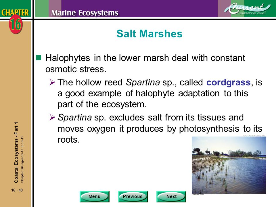 Salt Marshes Halophytes in the lower marsh deal with constant osmotic stress.
