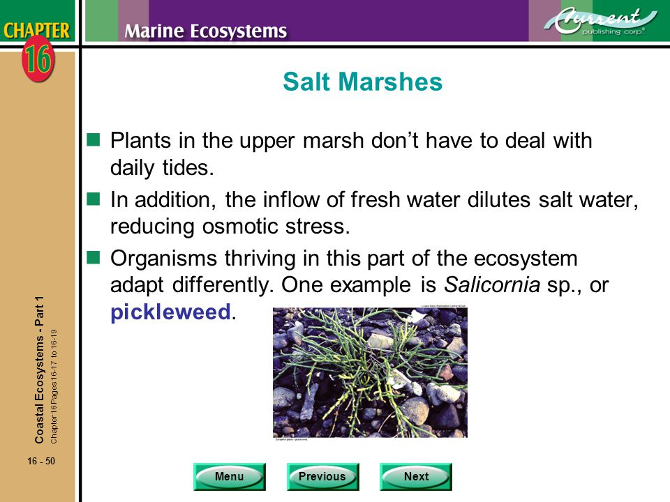 Salt Marshes Plants in the upper marsh don't have to deal with daily tides.