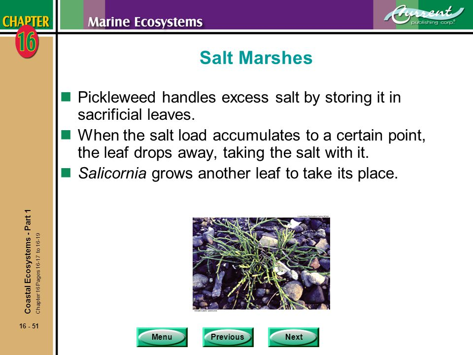 Salt Marshes Pickleweed handles excess salt by storing it in sacrificial leaves.