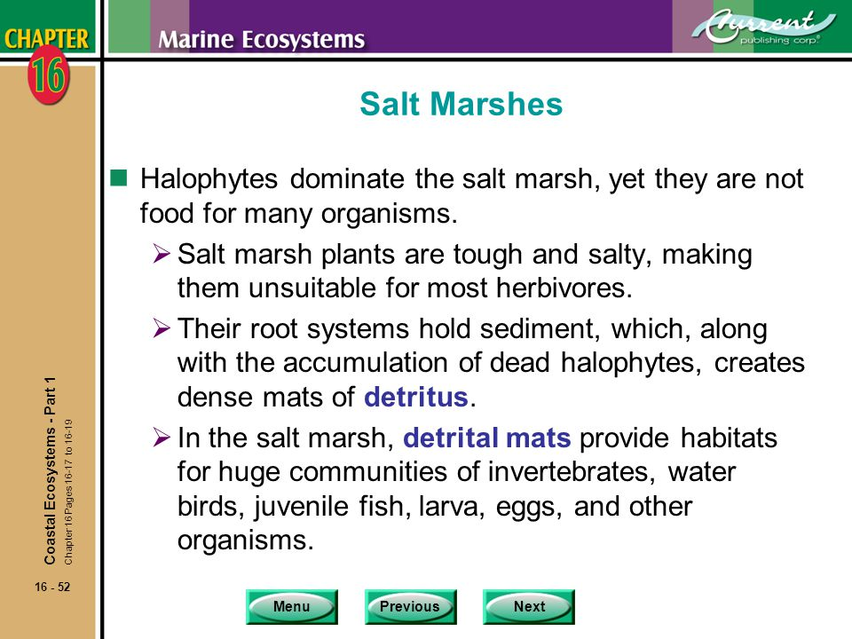 Salt Marshes Halophytes dominate the salt marsh, yet they are not food for many organisms.