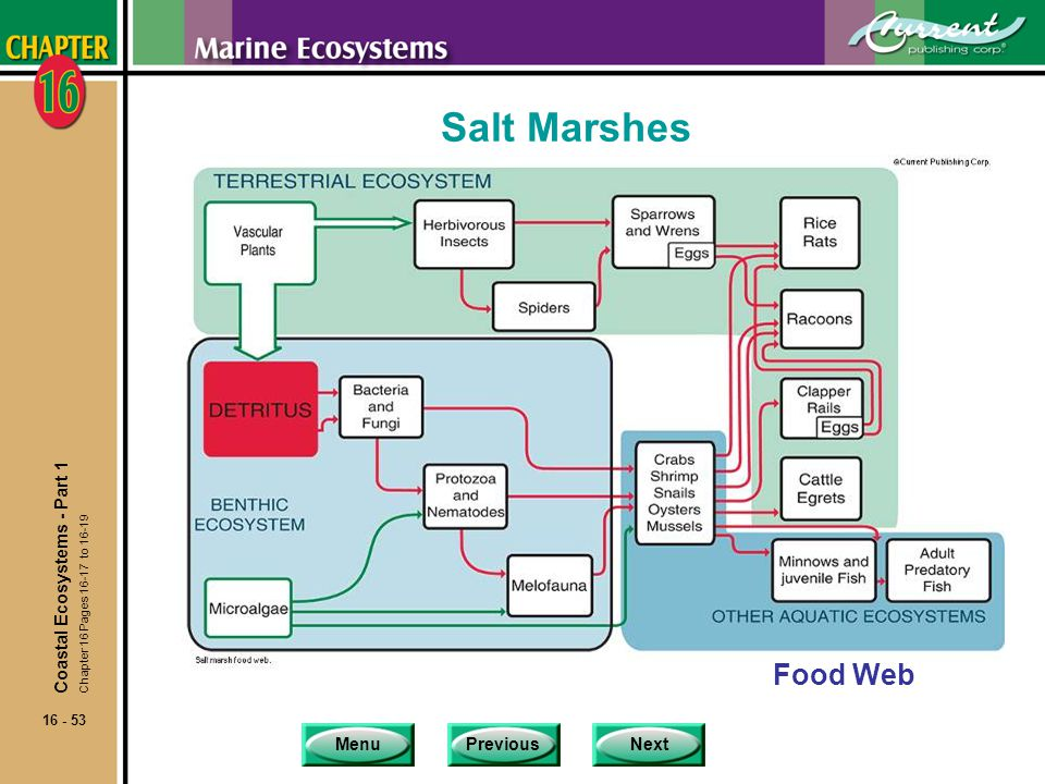 Salt Marshes Food Web Coastal Ecosystems - Part 1
