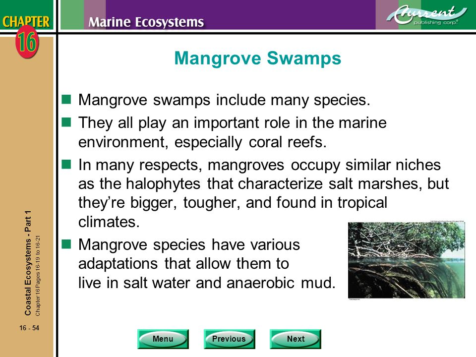 Mangrove Swamps Mangrove swamps include many species.