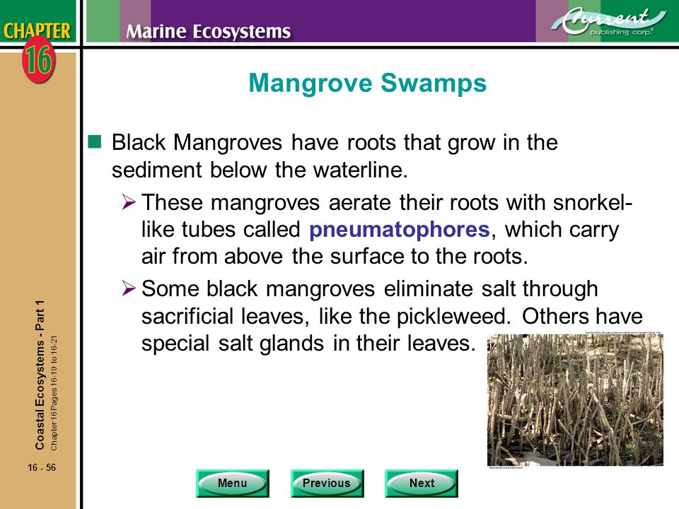 Mangrove Swamps Black Mangroves have roots that grow in the sediment below the waterline.