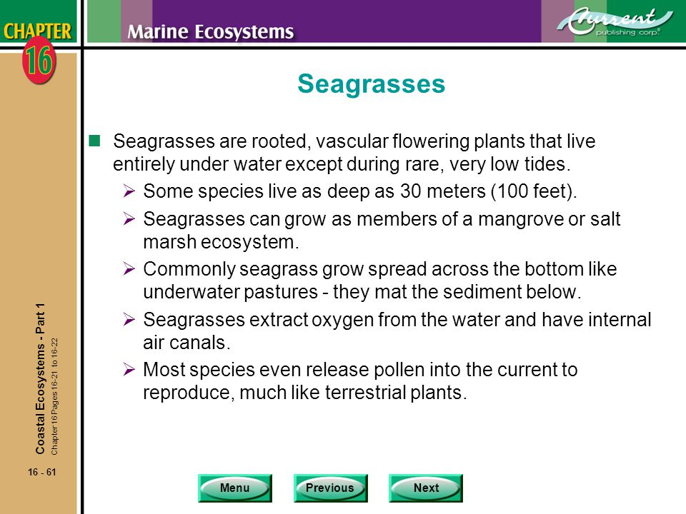 Seagrasses Seagrasses are rooted, vascular flowering plants that live entirely under water except during rare, very low tides.
