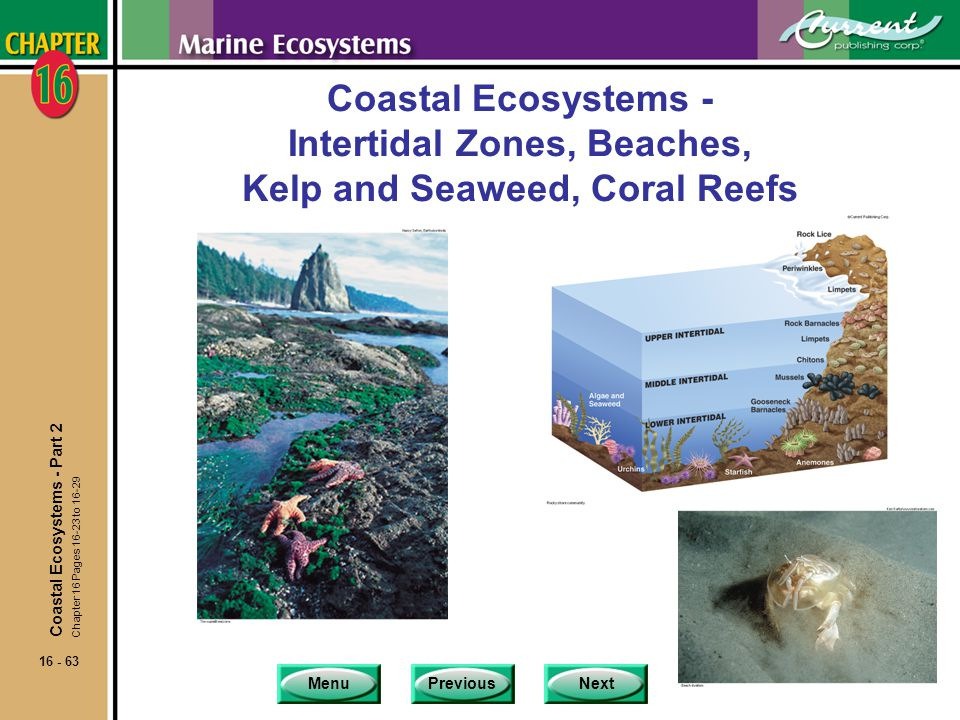 Coastal Ecosystems - Intertidal Zones, Beaches, Kelp and Seaweed, Coral Reefs