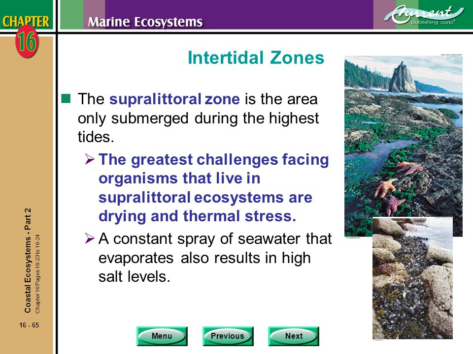 Intertidal Zones The supralittoral zone is the area only submerged during the highest tides.