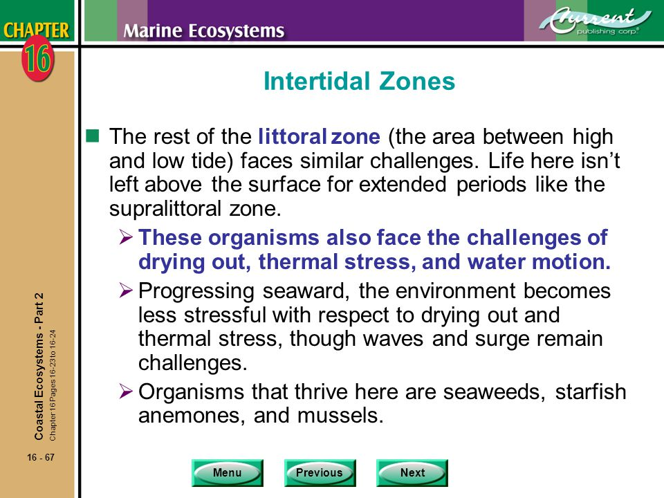 Intertidal Zones