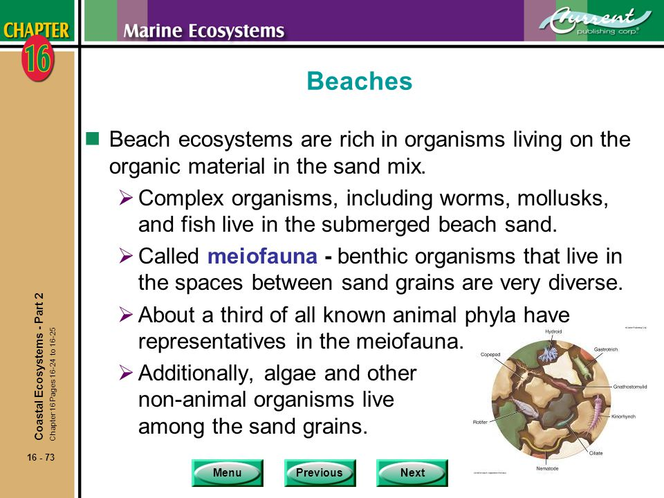Beaches Beach ecosystems are rich in organisms living on the organic material in the sand mix.