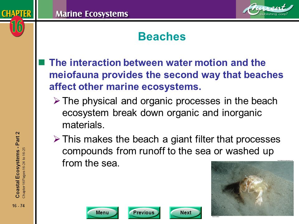 Beaches The interaction between water motion and the meiofauna provides the second way that beaches affect other marine ecosystems.
