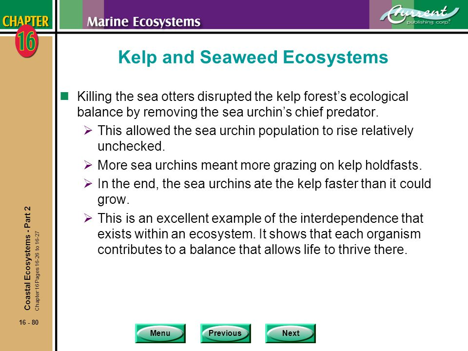 Kelp and Seaweed Ecosystems
