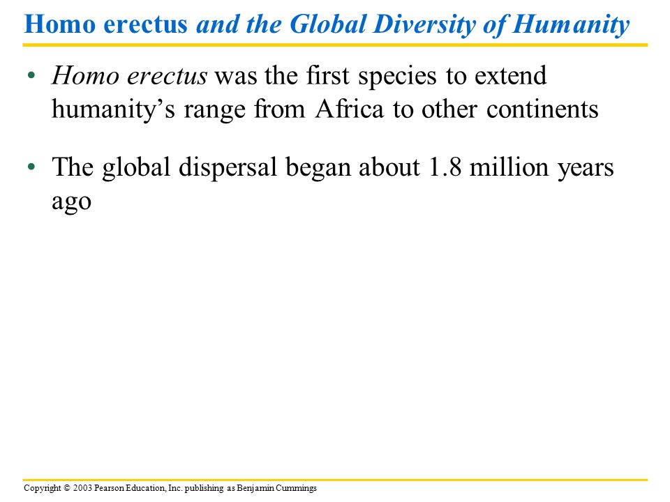 Homo erectus and the Global Diversity of Humanity