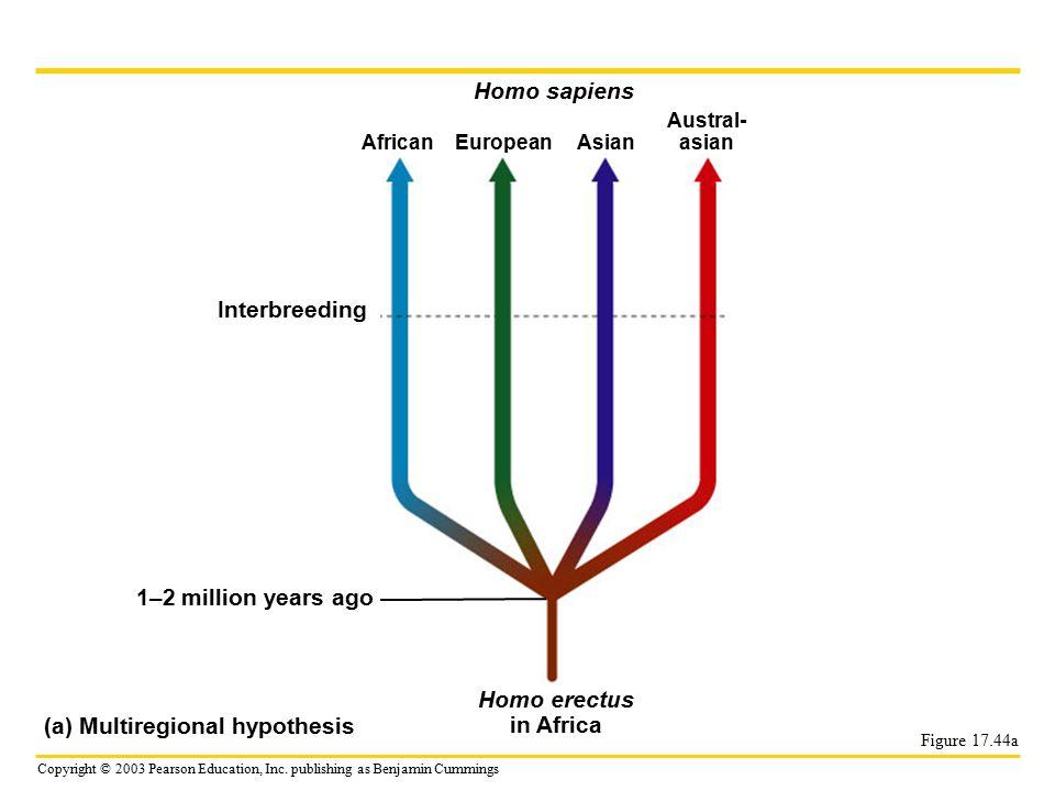 Homo sapiens Interbreeding Homo erectus in Africa