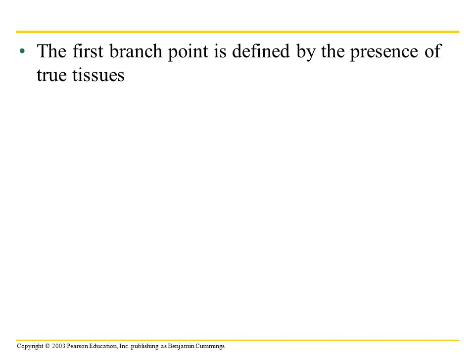 The first branch point is defined by the presence of true tissues