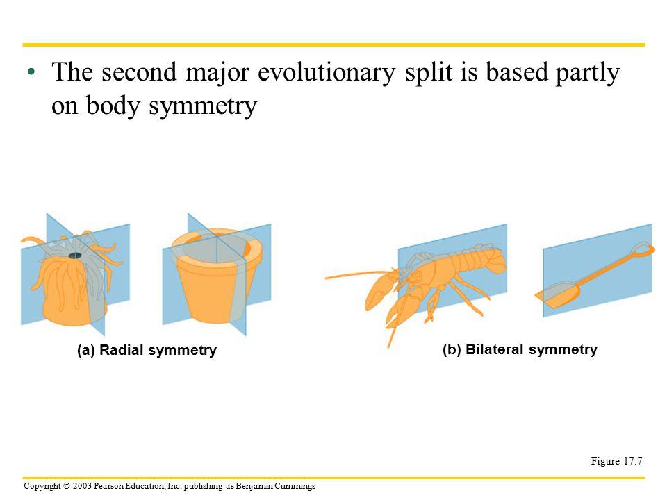 (b) Bilateral symmetry