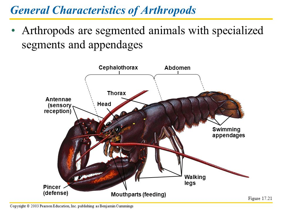 General Characteristics of Arthropods