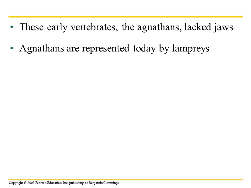 These early vertebrates, the agnathans, lacked jaws