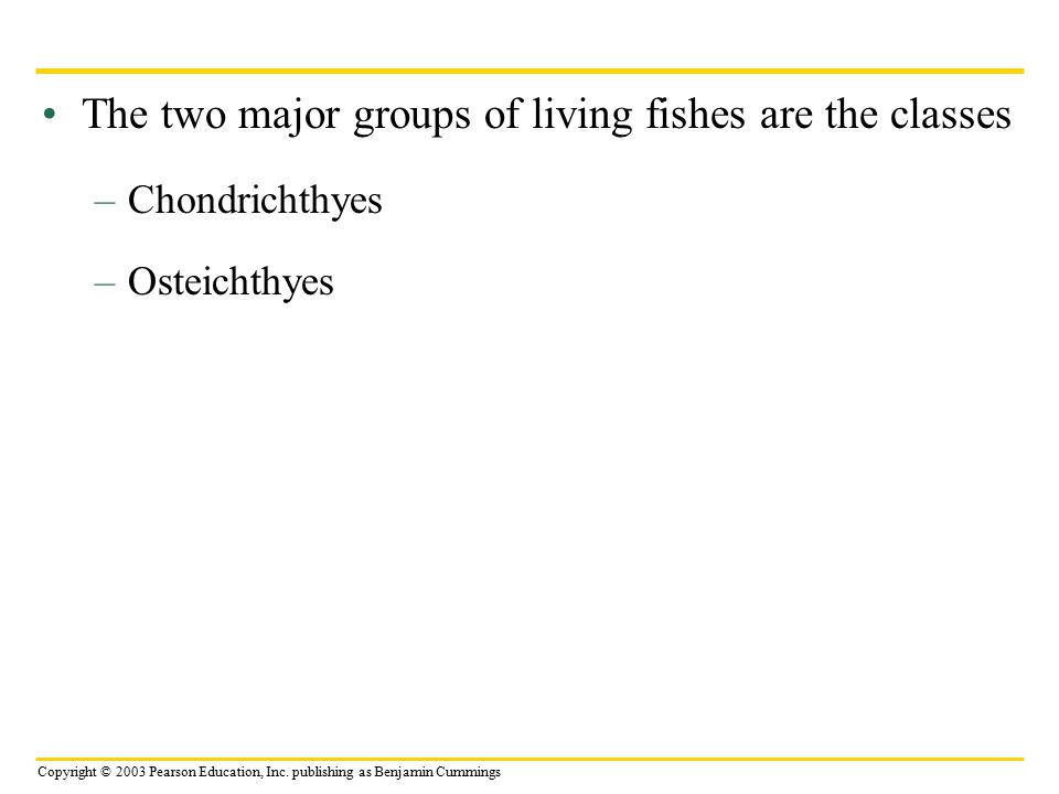 The two major groups of living fishes are the classes