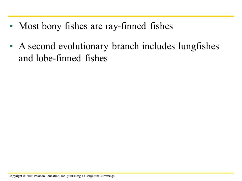 Most bony fishes are ray-finned fishes