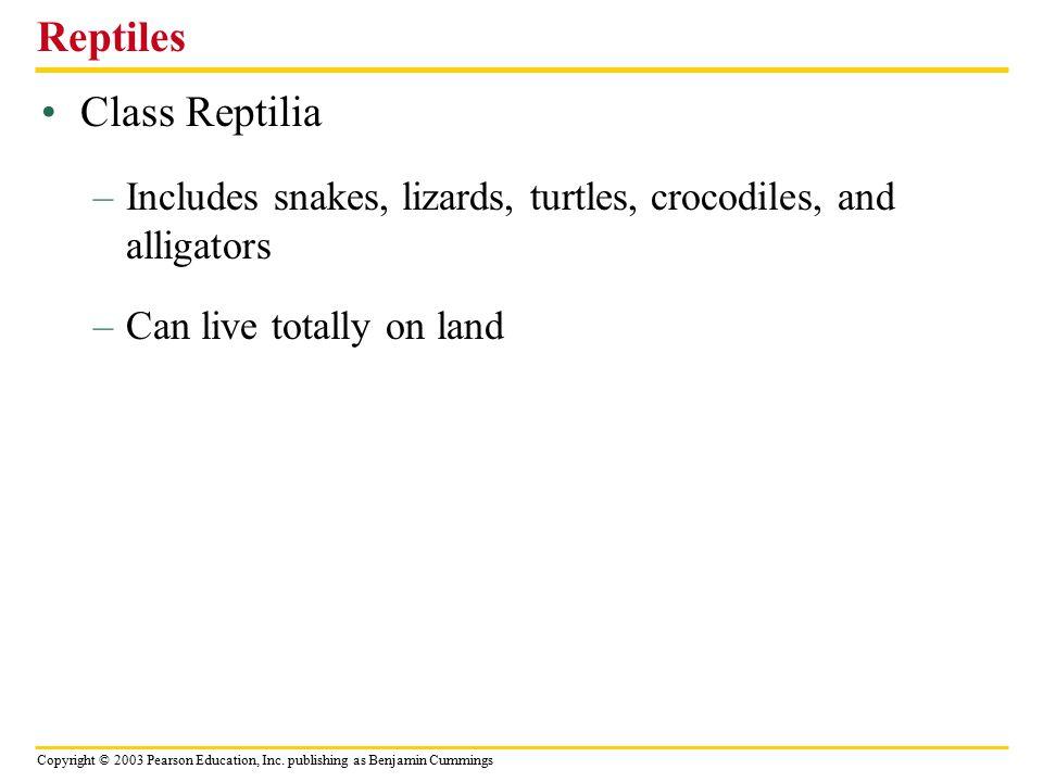 Reptiles Class Reptilia
