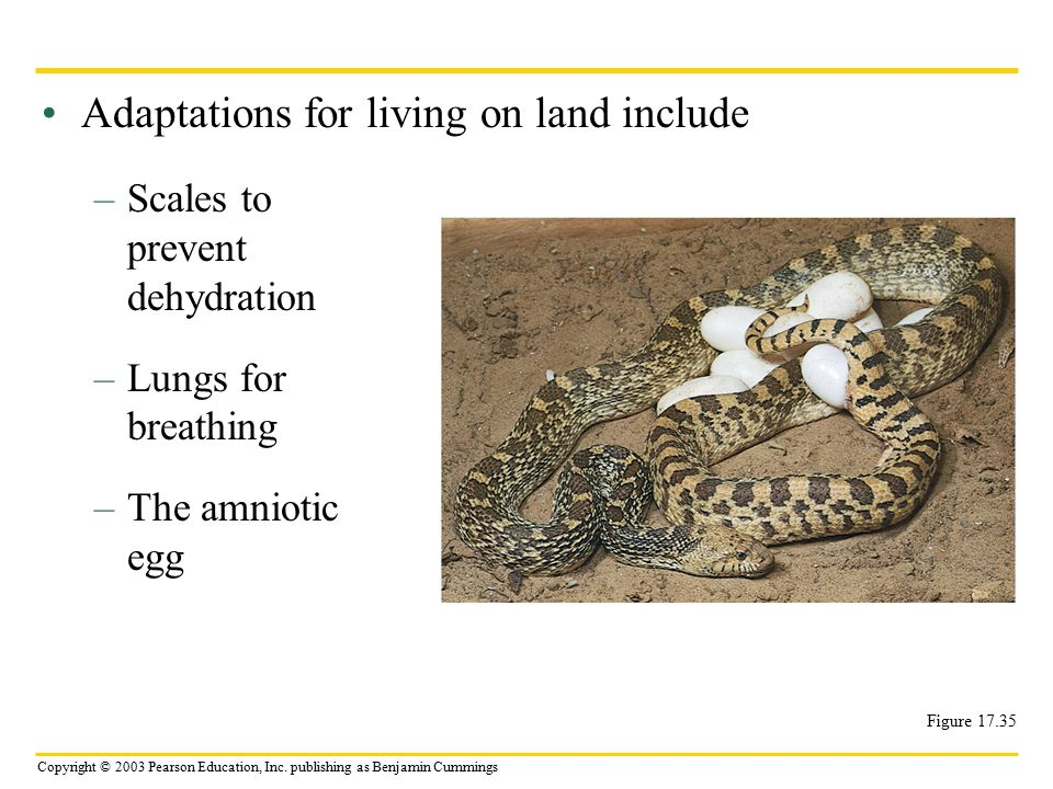Adaptations for living on land include