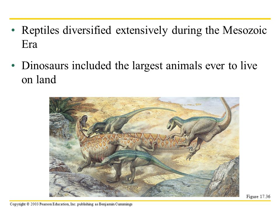 Reptiles diversified extensively during the Mesozoic Era