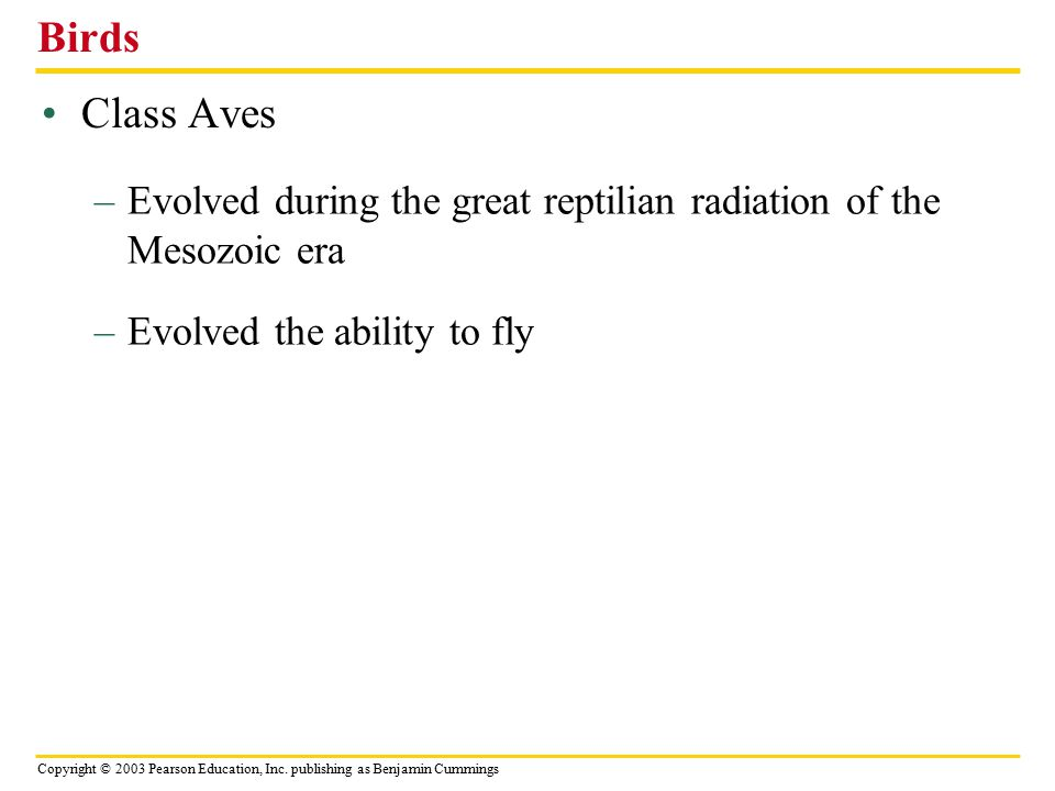 Birds Class Aves. Evolved during the great reptilian radiation of the Mesozoic era.