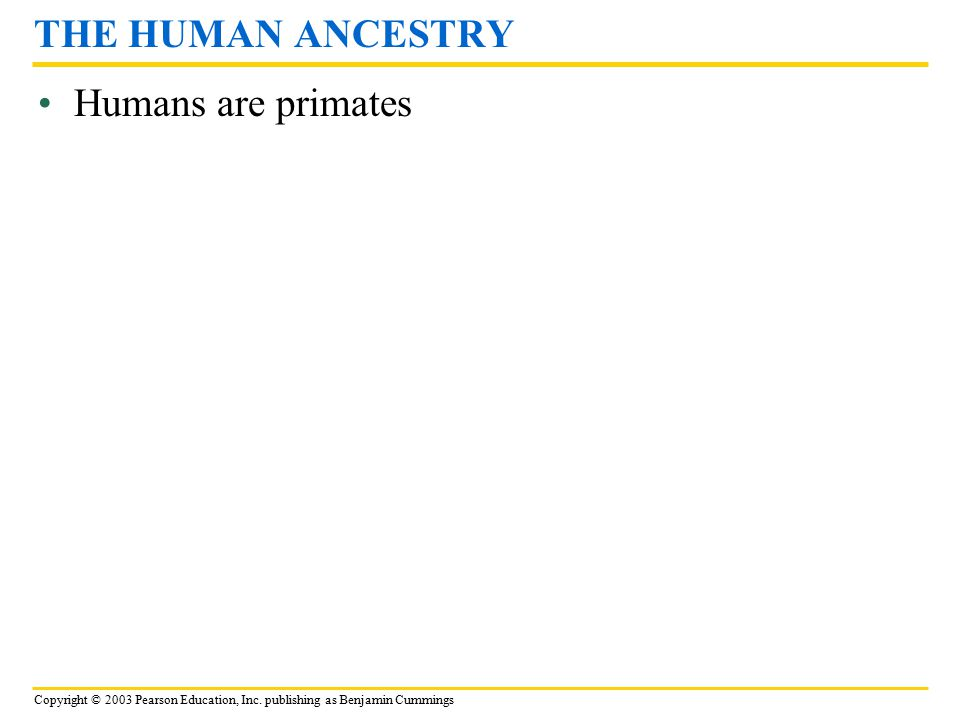 THE HUMAN ANCESTRY Humans are primates