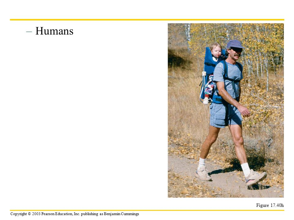 Humans Figure 17.40h
