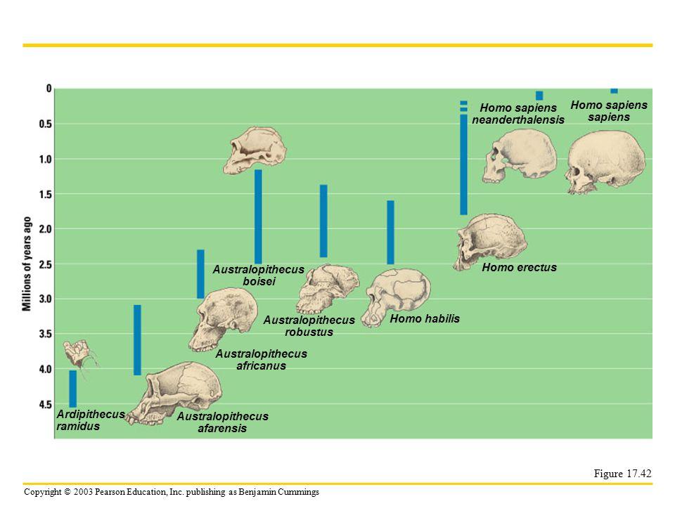 Homo sapiens neanderthalensis Homo sapiens sapiens