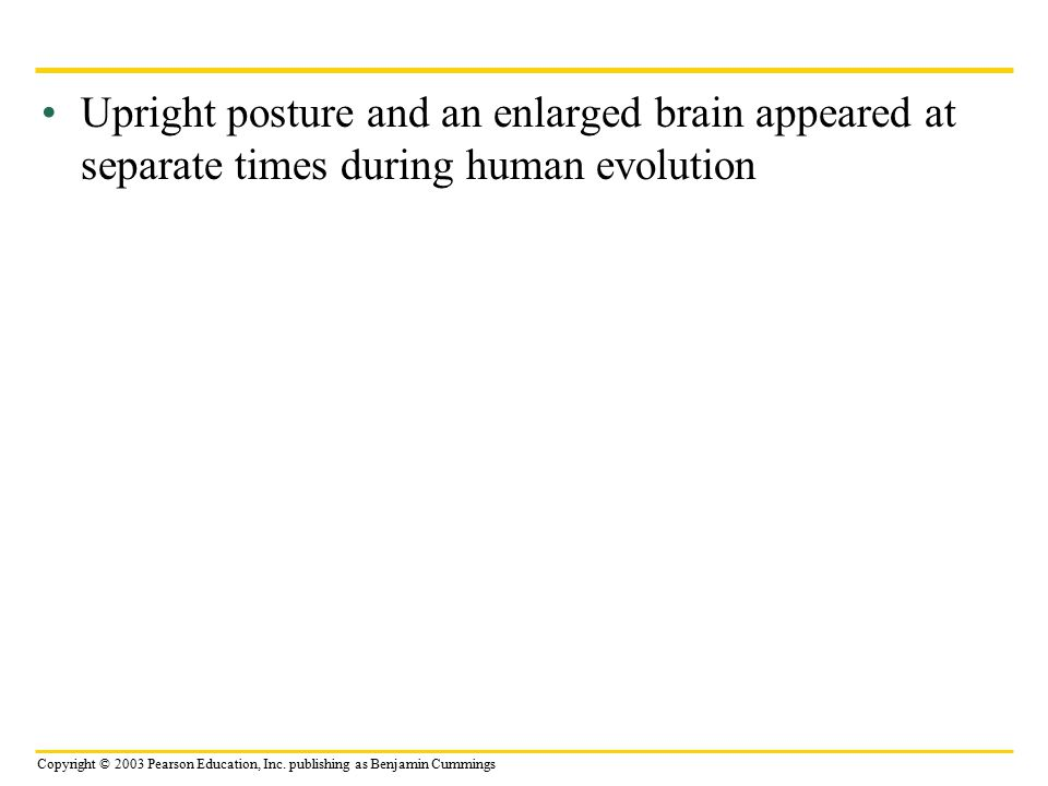 Upright posture and an enlarged brain appeared at separate times during human evolution