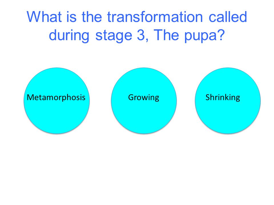 What is the transformation called during stage 3, The pupa