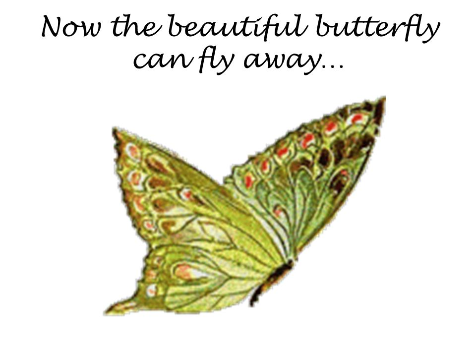 Now the beautiful butterfly can fly away…