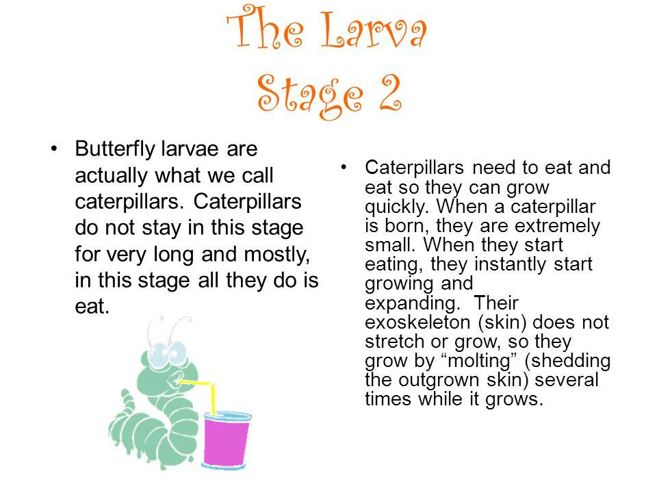 The Larva Stage 2