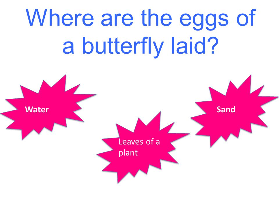 Where are the eggs of a butterfly laid