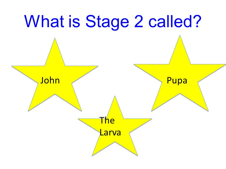 What is Stage 2 called John Pupa The Larva