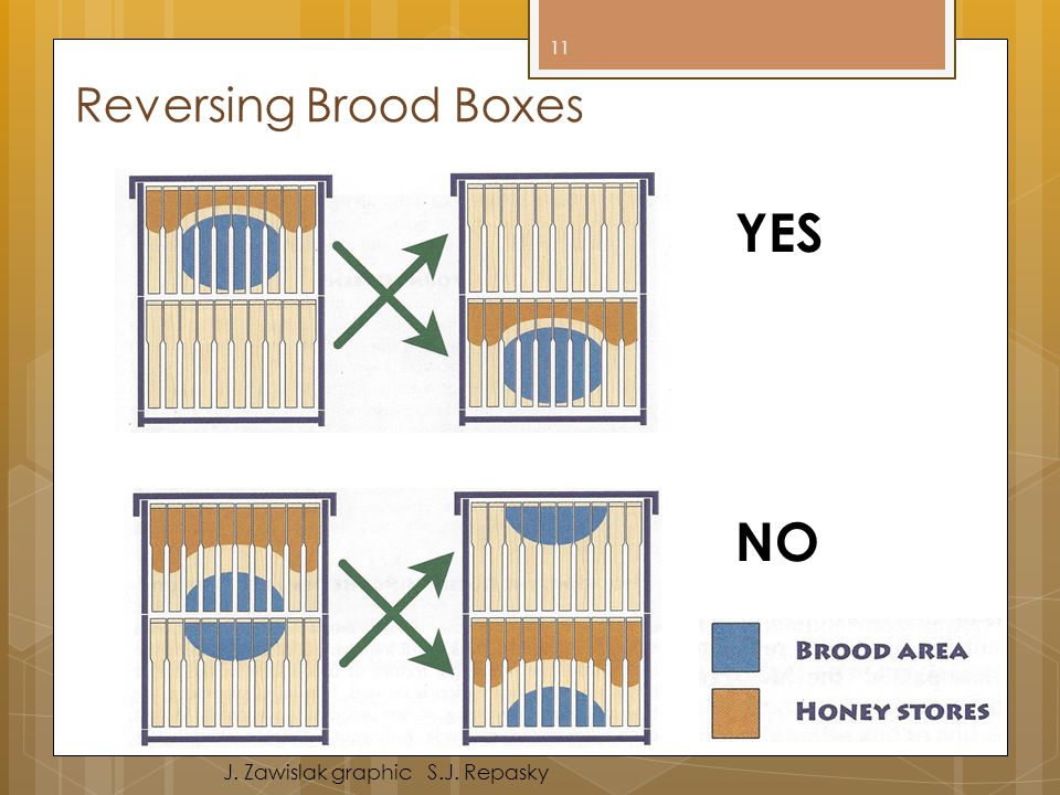 YES NO Reversing Brood Boxes J. Zawislak graphic S.J. Repasky