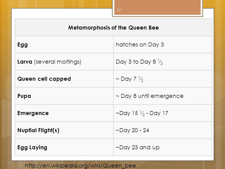 Metamorphosis of the Queen Bee