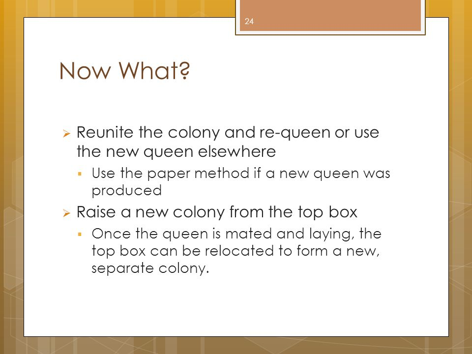 Now What Reunite the colony and re-queen or use the new queen elsewhere. Use the paper method if a new queen was produced.